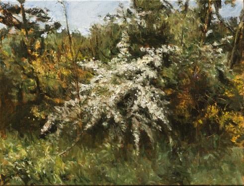 Fred Schley  Blossom near Rosmalen