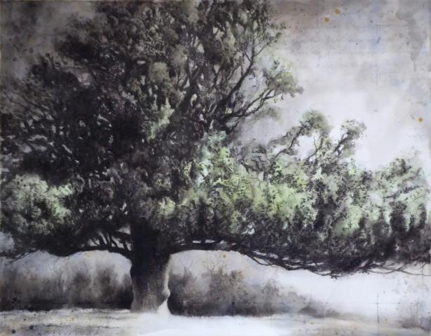 Gary Cook  West Melbury Oak