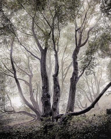 Mark S Payne  Enchanted Forest  £3,950