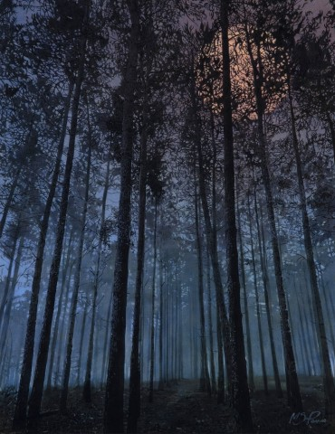 Mark S Payne  Night Time in the Forest  £2,950
