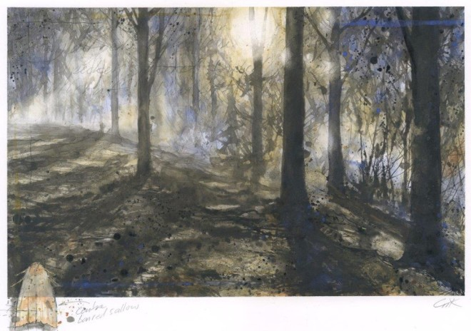 Edge of the wood  Gary Cook