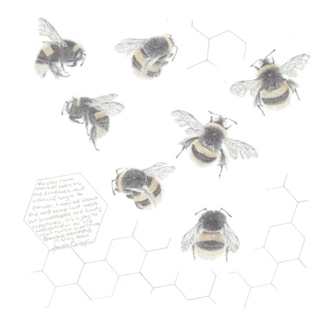 Louisa Crispin, Study of a Bumble Bee