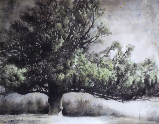 Gary Cook, West Melbury Oak