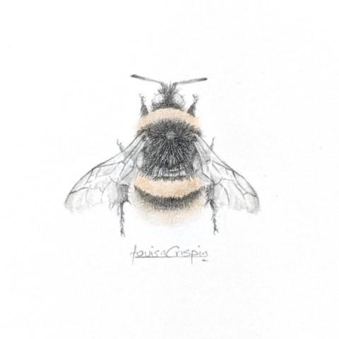 Louisa Crispin, Golden Bee