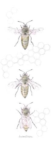 Louisa Crispin, Honey Bee