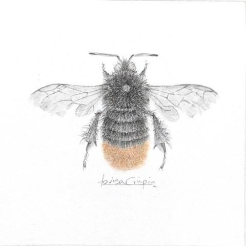 Louisa Crispin, Flame Bee