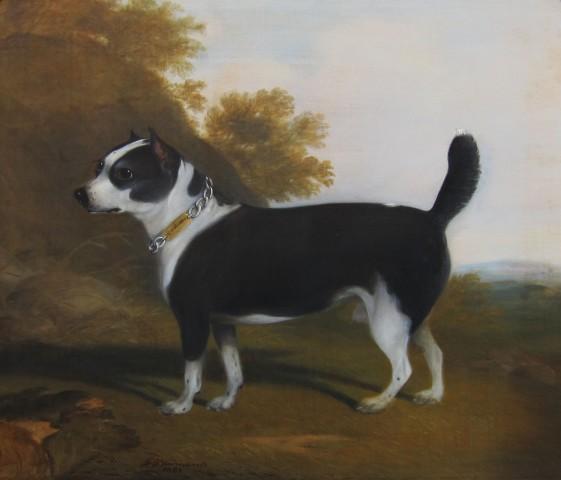Terrier in a landscape