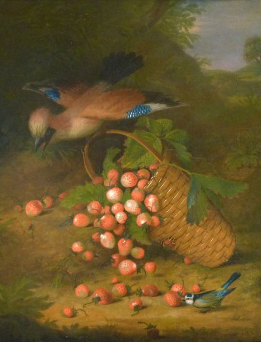 Bluejay with strawberries