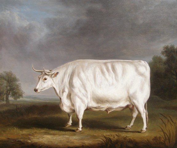 William Henry Davis, Chillingham bull in a field