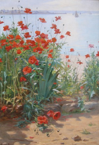 Poppies on the coast