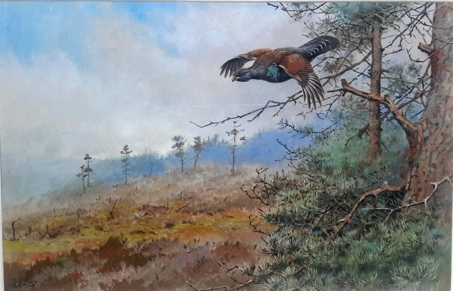 George Edward Lodge, Capercaillie in Flight