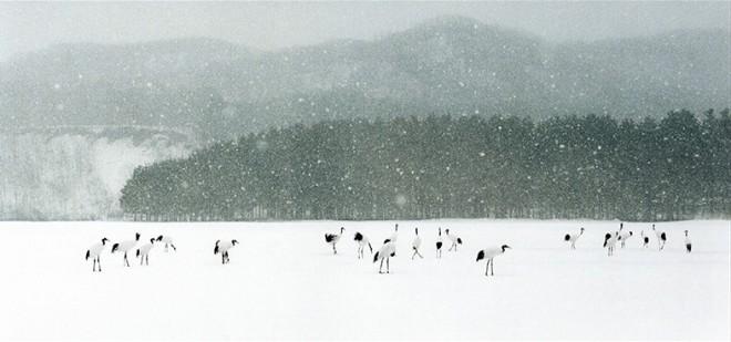 Leo K. K. Wong, Revelling in Snow, 1997