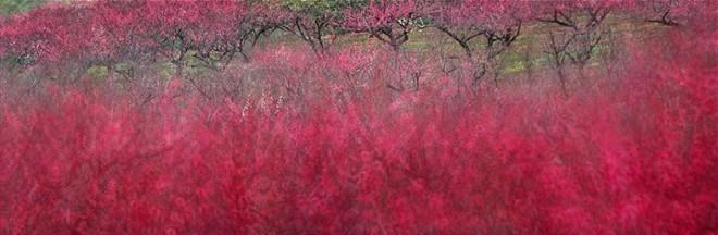 Leo K. K. Wong, Fiery Plum Blossom, 2014