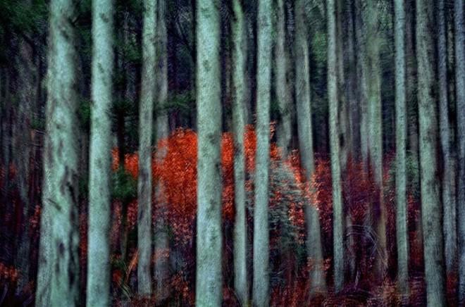 Leo K. K. Wong, Color Mutation, 2007