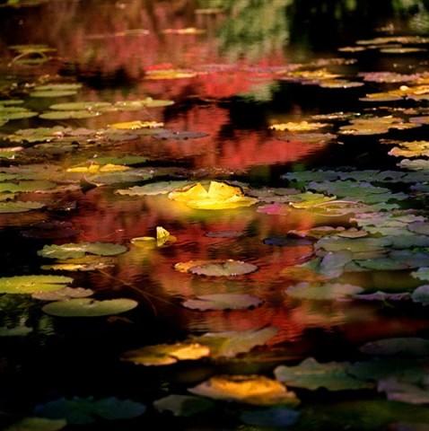 Leo K. K. Wong, Autumn Fantasy II, 1983