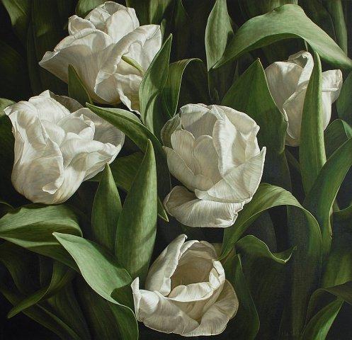 Silver Dollar Tulips