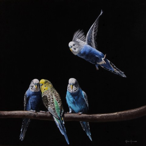 Marco Ramasso, Parakeets, 2014