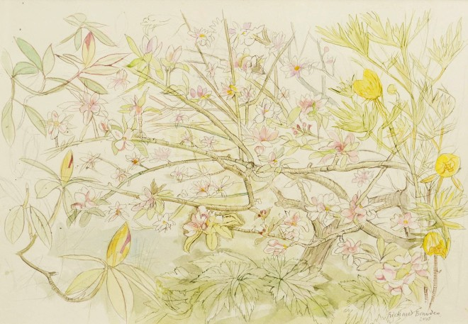 Richard Bawden, Apple Blossom