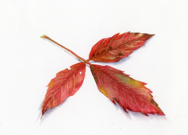 Liz Butler, Autumn Leaf