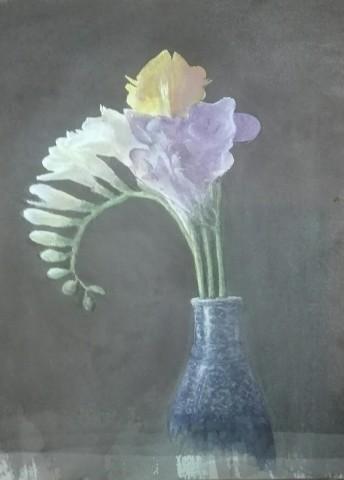 Cameron Galt, Iridiceae