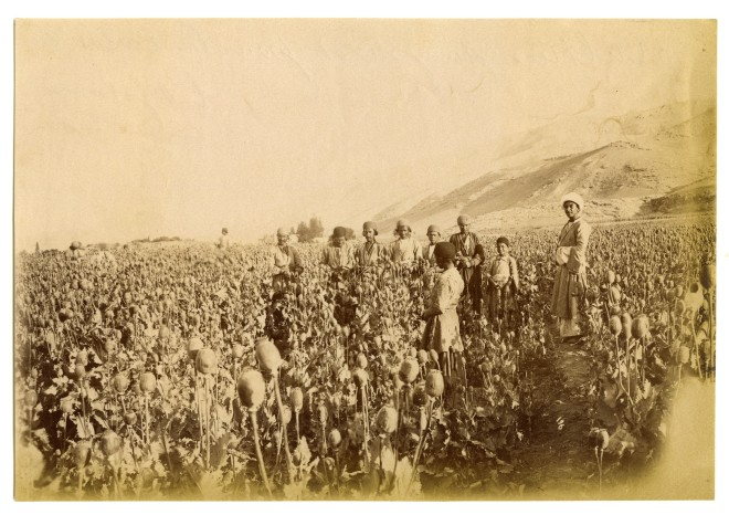 Antoin Sevruguin, An opium poppy field in Isfahan, Late 19th Century