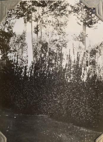 John Drinkwater, The British Legation gardens, Tehran, 1934
