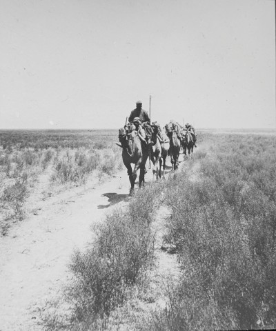 Not known, The Mughan Steppe, Late 19th or early 20th Century