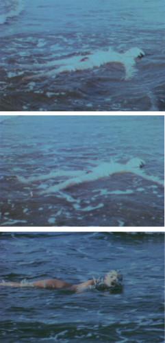 Ocean Bird (Washup)