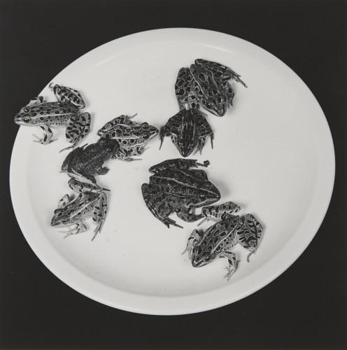 <div class=&#34;artist&#34;><strong>Robert Mapplethorpe</strong></div><div class=&#34;title&#34;><em>Frogs</em>, 1984</div><div class=&#34;medium&#34;>Silver Gelatin Print</div><div class=&#34;dimensions&#34;>50.8 x 40.6 cm - 20 x 16 ins<br>73.3 x 60.1 x 3 cm - 28 7/8 x 23 5/8 x 1 1/8 ins framed</div><div class=&#34;edition_details&#34;>Edition 4/10 + 2 APs</div>