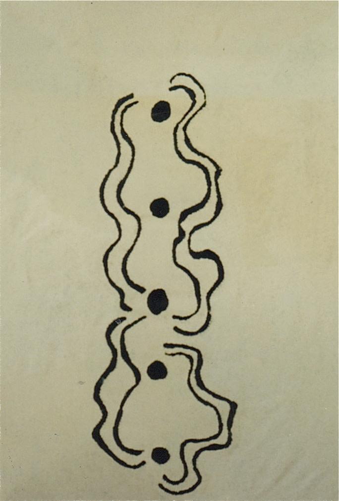 Beryl Nakamarra Barnes, Snake (Warna) Dreaming , 1991