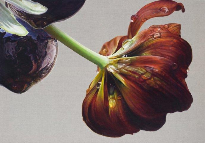 Anne Middleton, Tulipa liliacea, 2012