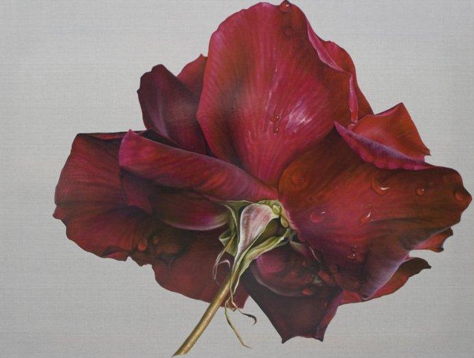 Anne Middleton, Rosa. A secret, 2012