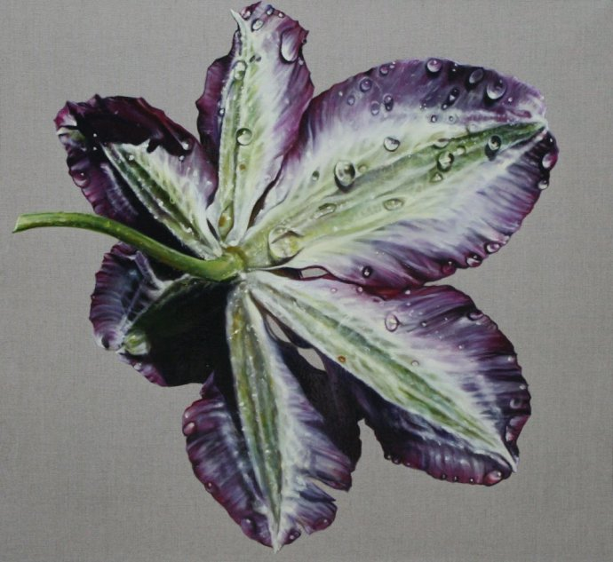 Anne Middleton, Clematis Study, 2013