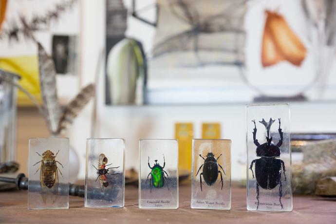 Allyson Reynolds, Beetle Miscellany