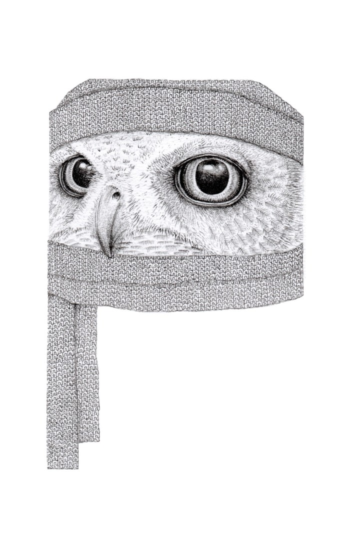 Jackie Case, Owl in Scarf & Hat, 2014