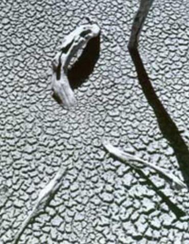 John Cato, Mud Abstract