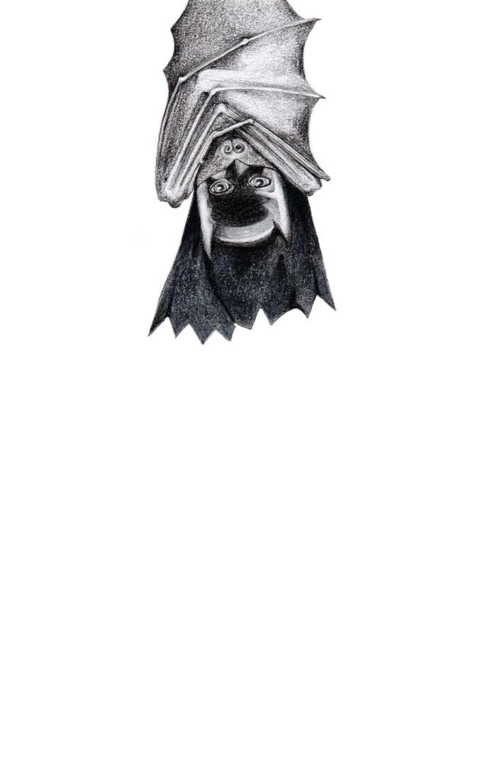 <div class=&#34;artist&#34;><strong>Jackie Case</strong></div><div class=&#34;title&#34;><em>I Am the Batman</em>, 2014</div><div class=&#34;medium&#34;>graphite on paper</div><div class=&#34;dimensions&#34;>27 x 22 cm </div>