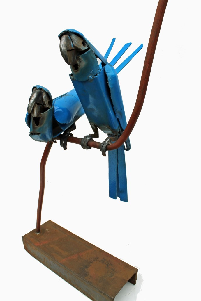 Iain Nutting, Spix Macaws, 2016