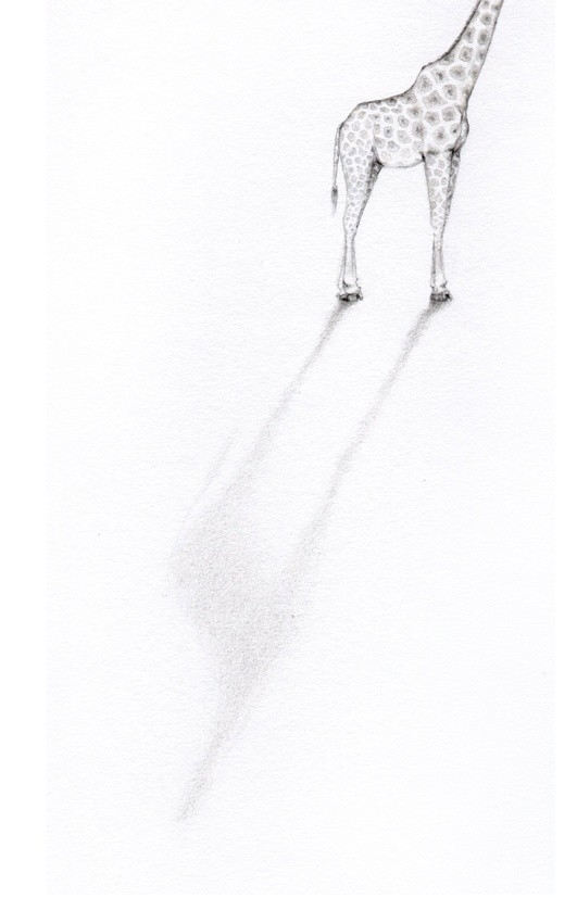 <div class=&#34;artist&#34;><strong>Jackie Case</strong></div><div class=&#34;title&#34;><em>Headless Giraffe</em>, 2015</div><div class=&#34;medium&#34;>graphite on paper</div><div class=&#34;dimensions&#34;>27 x 22 cm<br>10 5/8 x 8 5/8 in</div>