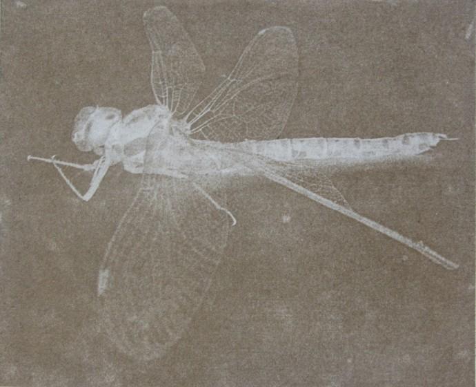Melanie Goemans, Dragonfly, 2015