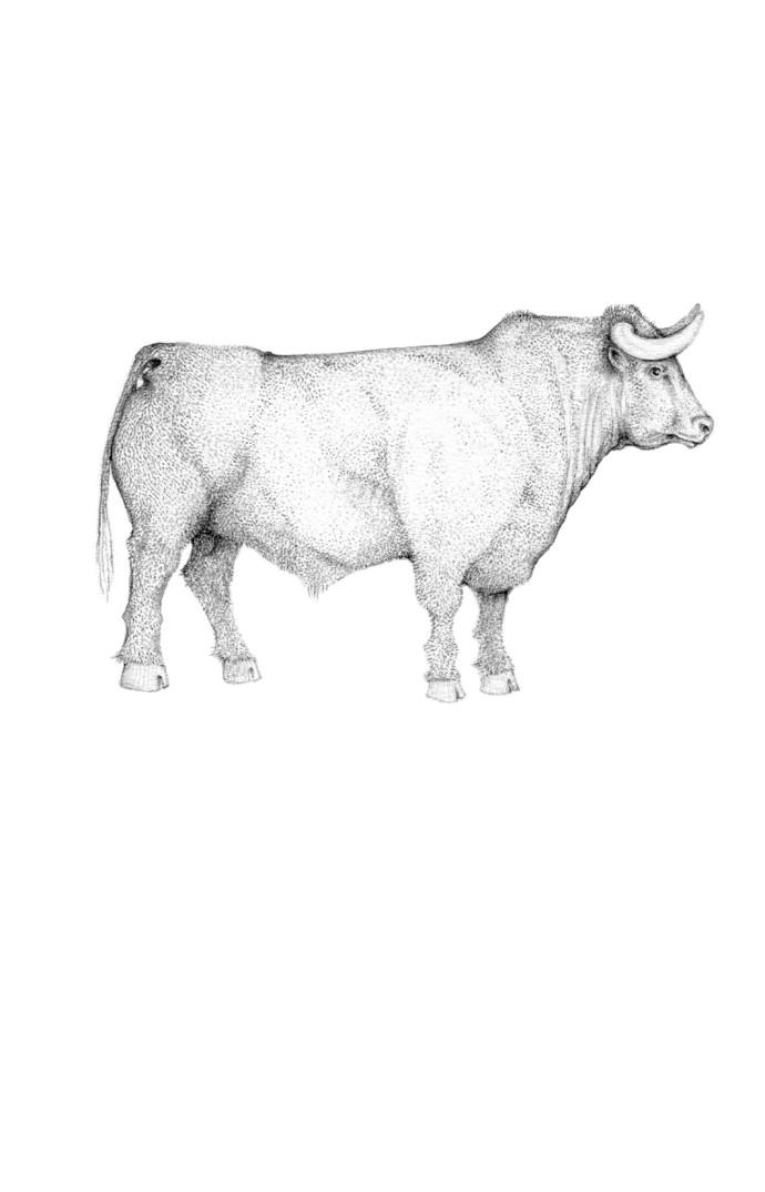 Jackie Case, A Whole Lotta Bull, 2014