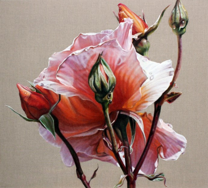 Anne Middleton, Rosa I, 2014