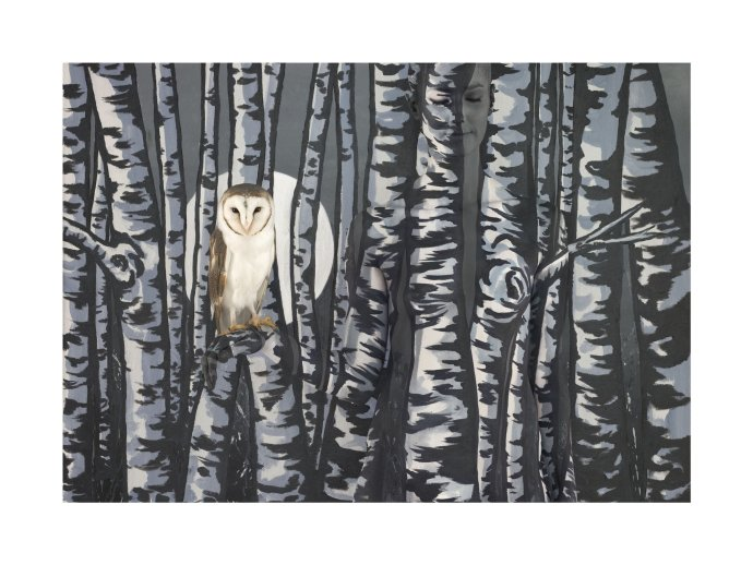 <p>Emma Hack, Owl in Birch Trees, 2011, C/Type Digital Print Ed 2/10, 38 x 47 in</p>