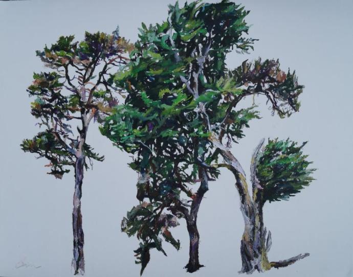 Patricia Cain, Study of Three Trees, 2017