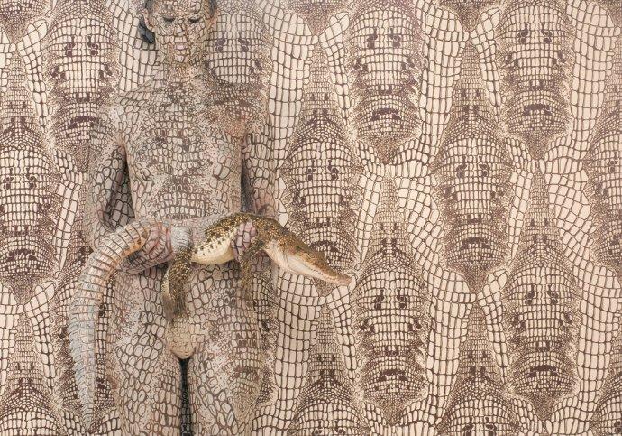 Emma Hack, Evolution Crocodile, 2012