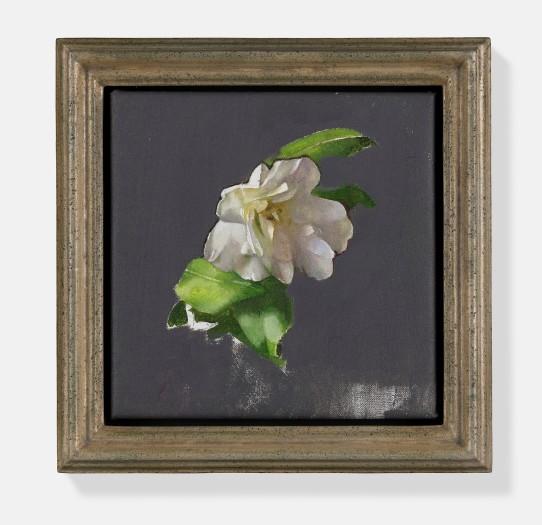 Diarmuid Kelley, Untitled (Camellia), 2018