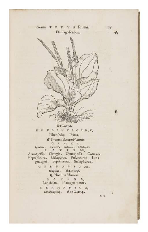 Brunfels' innovative Herbals, 1531-1532