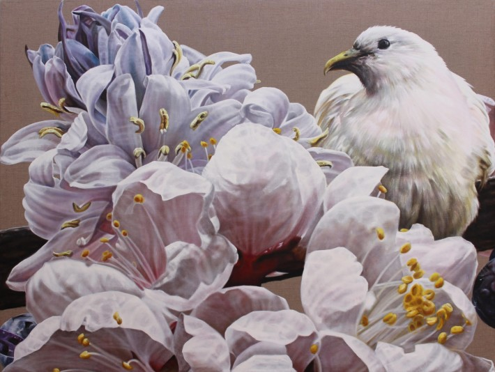 """<span class=""""artist""""><strong>Anne Middleton</strong></span>, <span class=""""title""""><em>The gentle messenger: Pied Imperial Pigeon</em>, 2015</span>"""