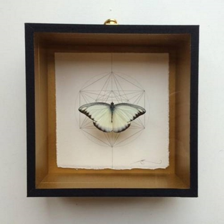 Geometry of the Butterfly – Silver Grey