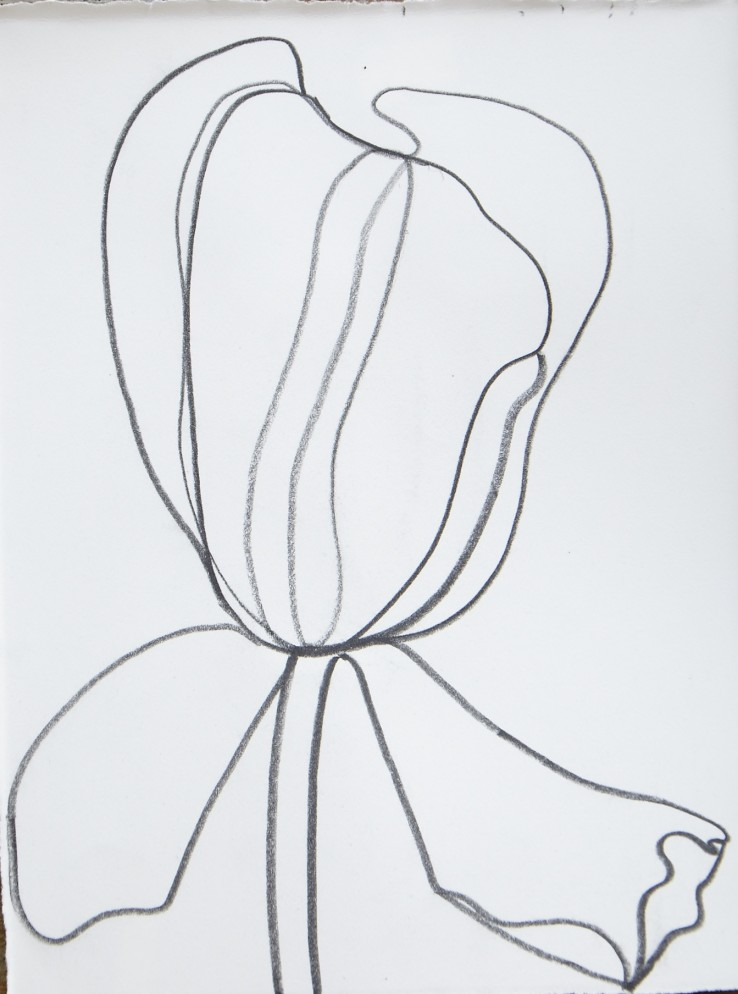 Sarah Armstrong-Jones  Open Tulip, 2014  Pencil on paper  20 x 15 cm